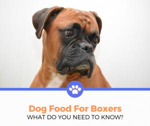 Boxer dog food