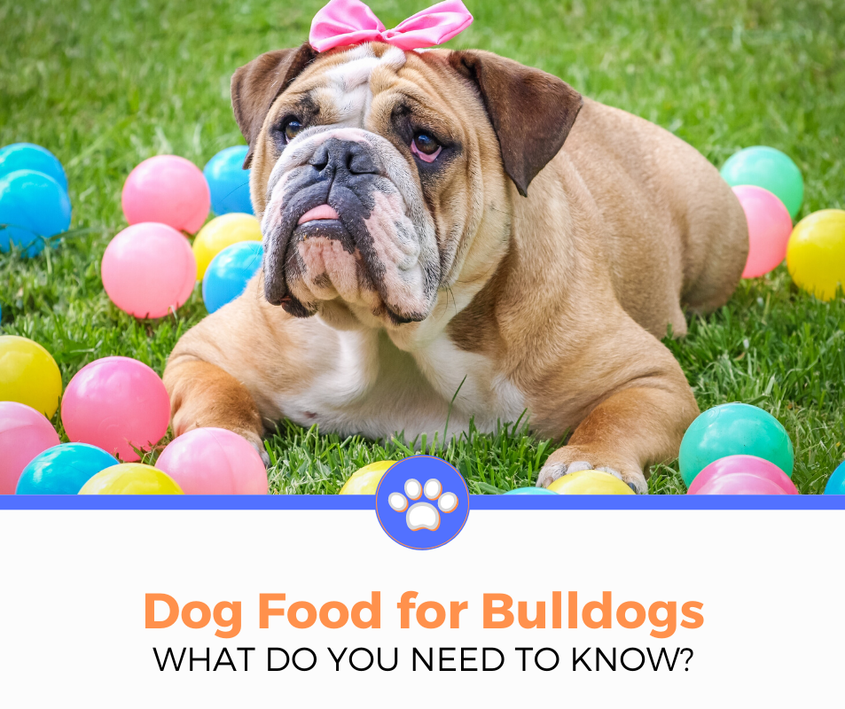 Best Dog Food For Bulldog