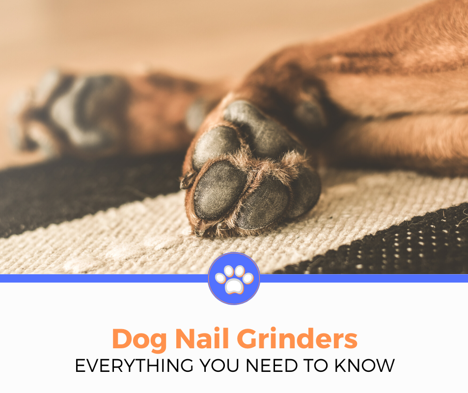 BEST NAIL GRINDER FOR DOGS