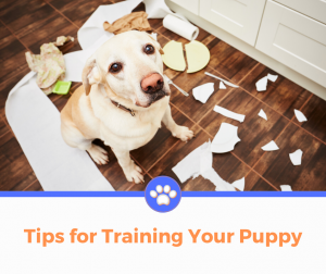 New Puppy Tips