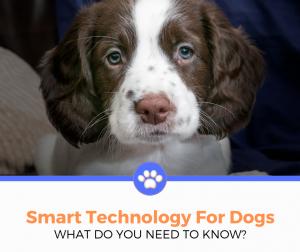Dog Smart Technology