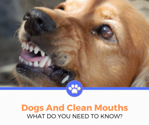 dogs clean mouth