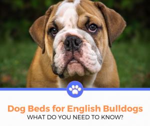dog bed for english bulldog