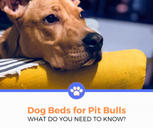 Best Dog Bed for Pit Bull