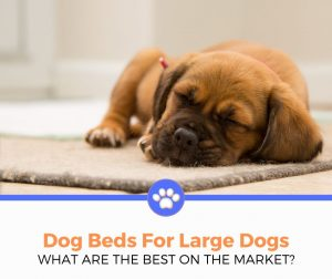 top best dog beds for large dogs reviewed