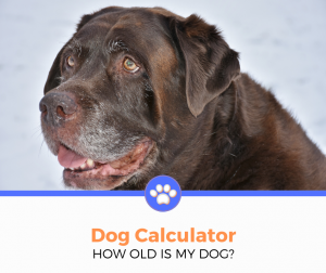 Dog Calculator